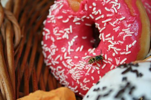 wasp enjoying a donut