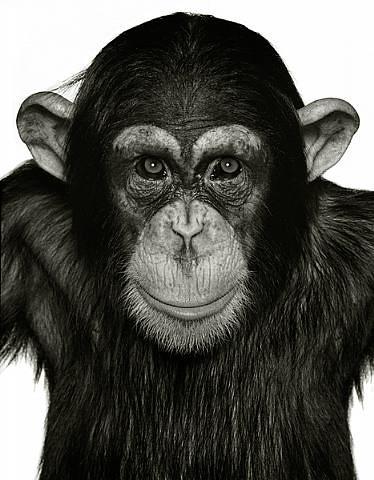 Albert Watson, Monkey Series 1994