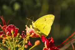 Passeio Pelo Campo (Moretto Studio Art) Tags: natureza nature birds aves pássaros butterflies borboletas fauna flora