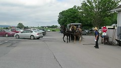 Amish buggy in Intercourse in Pennsylvania in USA 2015 (biketommy999) Tags: usa pennsylvania amish 2015 biketommy biketommy999 intercourse djur animal