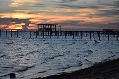 Montrose, AL. (Hollingsworth18) Tags: mobile bay montrose blue heron oaks oak trees wharf dock pier sunset alabama water waves tide coast