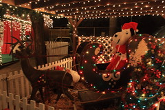 Snoopy riding in a sleigh (lehcar1477) Tags: holiday reindeer zoo christmaslights snoopy sleigh stoneham zoolights santascastle