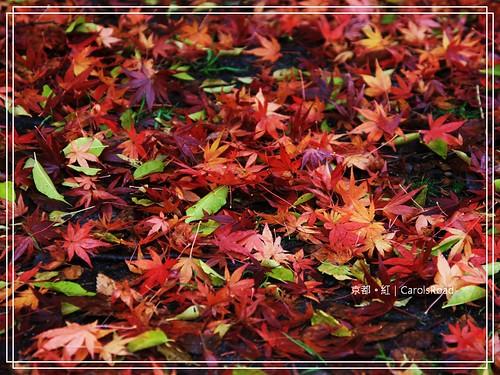 2009-12-11 京都 104 R