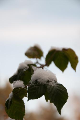 Schneeträger