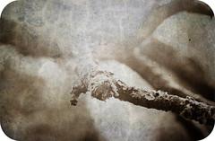 s i m p l e (Per Erik Sviland) Tags: tree texture sepia photoshop nikon bokeh layers erik per lightroom d300 cs4 pererik roundedcorners sviland sqbbe pereriksviland