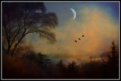 Flying into the Golden Night (jackaloha2) Tags: moon birds photoshop canon evening geese dusk layer legacy lastlight goldenlight goldennight texturelayer duskcolors stealingshadows canoneosdigitalrebelxsi tatot dragondaggerphoto artofimages miasbest miasexcellence daarklands bestcapturesaoi legacyexcellence flickrvault magicunicornverybest selectbestfavorites selectbestexcellence magicunicornmasterpiece sailsevenseas trolledproud crazygeniuses daarklandsexcellence sbfmasterpiece jackaloha2 exoticimage