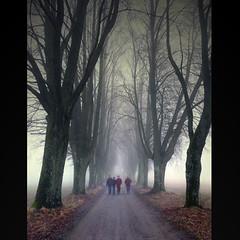 In The Fog (pixel_unikat) Tags: street tree misty fog austria mood row persons avenue muehlviertel 500x500 infinestyle notexture