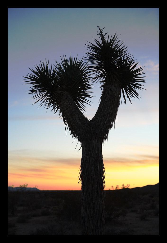 IMAGE: http://farm5.static.flickr.com/4037/4255204831_4bd9840fff_b.jpg