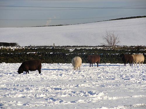 Snowy Huddersfield 4