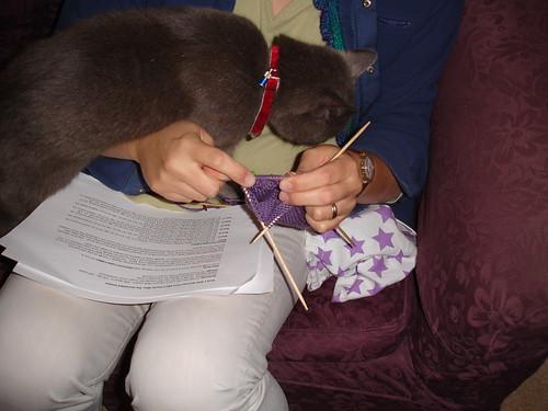 henrycat lends a paw (1)
