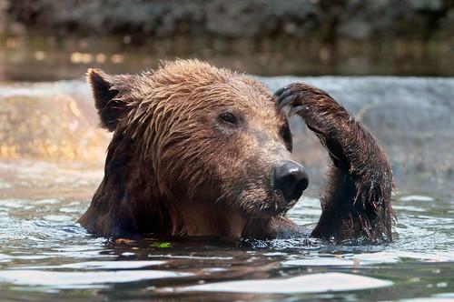 フリー画像| 動物写真| 哺乳類| 熊/クマ| 考える/悩む| お風呂/水浴び|      フリー素材|