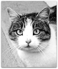 Scheggia (Simply Viola) Tags: cats felini gatti animali