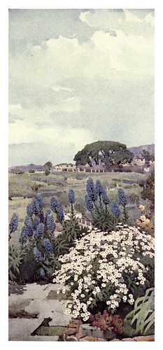 017-Flores de orgullo de Madeira y margaritas-The flowers and gardens of Madeira - Du Cane Florence 1909