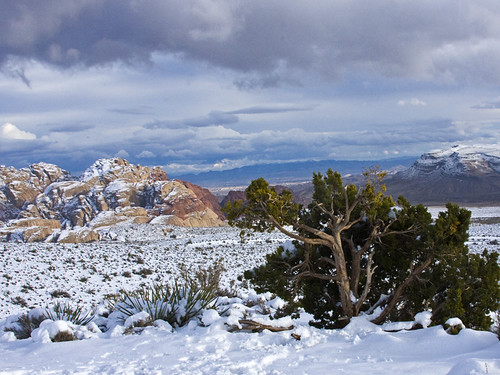 00821-Snow in Redrock Jan 2010-16