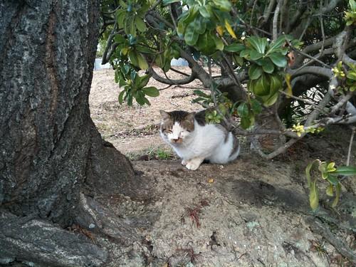 Today's Cat@2010-01-24