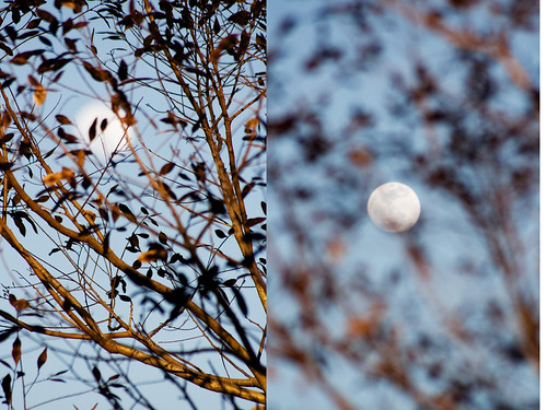 low moon caught diptych