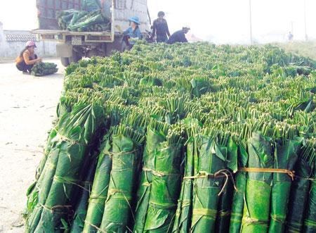 La dong is bought from Thanh Hoa, Nghe An and Northern mountainous  provinces