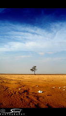 Lonely.. (Shrf AlMalki..) Tags: tree nature dead death desert drought bone lonely  agreed     shrf  almalki