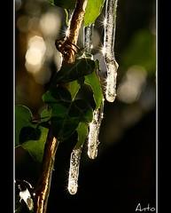 La bellezza nelle piccole cose (ViaggiAnt) Tags: gelo inverno riflessi luce stelle ghiaccio edera ghiaccioli bagliori sigma105macro canoneos400d viaggiant