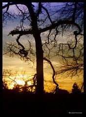 Sleepy Hollow (El Cuentista) Tags: sunset tree forest arbol atardecer branch cross dusk cruz bosque crucifix trunk puestadesol tronco árvore anochecer crucifijo ilustrarportugal