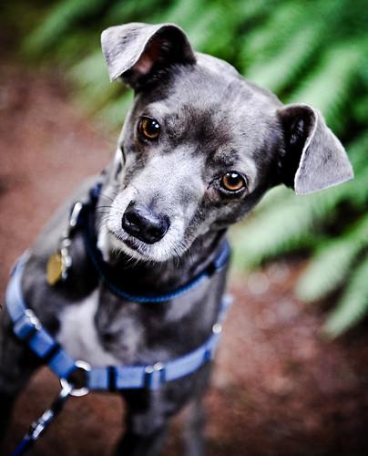フリー画像| 動物写真| 哺乳類| イヌ科| 犬/イヌ|       フリー素材|