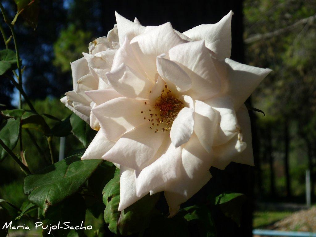 Fotos de Paisajes y Flores (Propias)