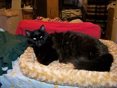 Kat in the new bed