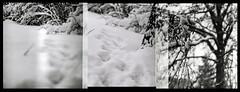 times/snow overlapping (OverdeaR [donkey's talking monkey's nodding]) Tags: bw snow 120 6x6 film mediumformat square branches scan scanned np belgrade beograd p6 pentaconsix sonnar orwo czj pentaconsixtl np22 pentacon6tl labscan fujifrontier carlzeissjena18028sonnar