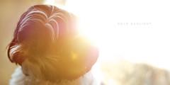 _Cold Sunlight - Day 53 of 365 (Max Di Capua) Tags: portrait dog sun sunlight animal 50mm glare sony shihtzu 365 f18 18 a100 project365 sonya100