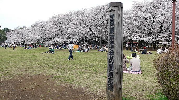 小金井公園賞櫻