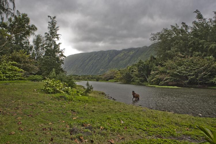 Scott Pasfield Photo Blog Waipi O Valley Amp Hi Ilawe Falls