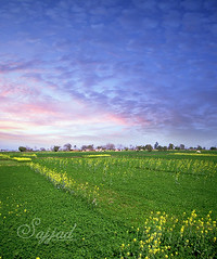 Sialkot (Sajjad Tufail ( in KL )) Tags: camera blue pakistan sky cloud green beautiful field yellow by clouds digital canon landscape photography photo shot sony captured meadows cybershot using fields crops challenge cyber amzing sialkot sajjad h50 coloud tufail sonyphotochallenge