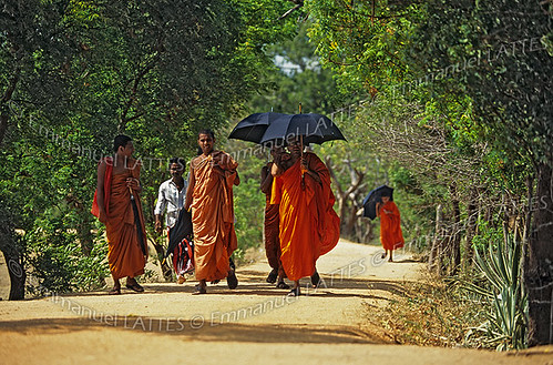Moines bouddhistes à Polonnaruwa (Sri Lanka).