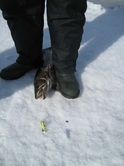 Unusual method (REGOR NOTPUL) Tags: fishing lakers icefishing loughboroughlake