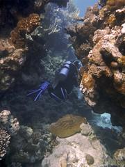 Entre rocas (FRosselot) Tags: redsea scubadiving buceo marrojo
