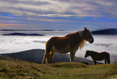 Saibi (Jabi Artaraz) Tags: naturaleza nature beautiful animal fauna caballo amazing europa europe gorgeous sony natur natura bilbao zb lovely bizkaia euskadi bilbo 1000views animaliak zaldia beautifulearth pottoka supershot 1000vistas euskoflickr fineartphotos fantasticnature abigfave superaplus aplusphoto flickrbest saibigain impressedbeauy diamondclassphotographer flickrdiamond excapture jartaraz bderechosdeautorauthorscopyrightbjabiartaraz bestofblinkwinners blinksuperstars