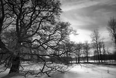 SPF 25 (Borgabisi (Kris Harrison)) Tags: winter snow sweden nikond200 nikon18200mm kapellskär borgabisi