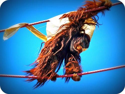 Orangutan Dreads