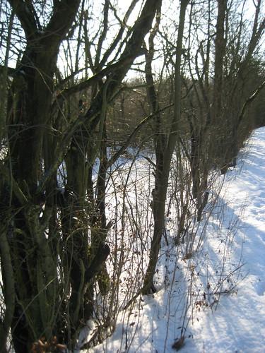 Schneeschnapschuss