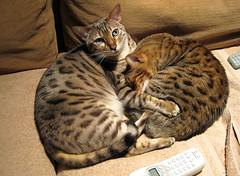 double snuggle