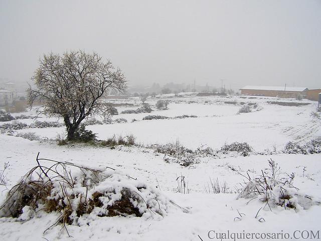 Amanecer blanco - falsa nevada mansa