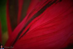 red-leaf-wtm