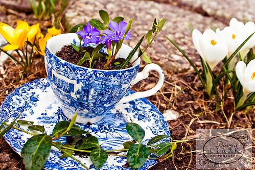 92/365 - Green Tea Garden