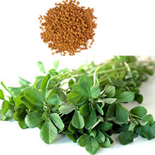 Fenugreek-1 by healthandsoul