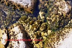 fungus mushroom river8839 (mikek666) Tags: mushroom cogumelo seta mantar hongo paddestoel pilz fong fungo bolet onddo μανιτάρι μύκητασ μύκησ