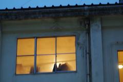 歌舞伎座 裏窓012