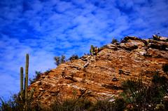 Saguaro (Ashley Marie Quinn) Tags: hiking adventure saguaro saguaronationalpark