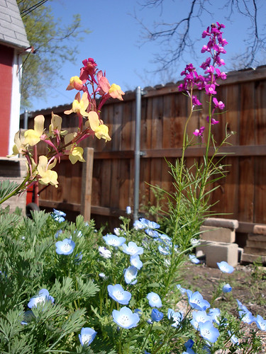backyard_wildflowers 012