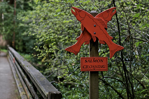 Salmon Crossing
