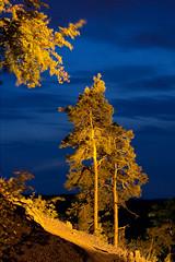 Burschanschaftsdenkmal Eisenach - Bäume bei Nacht - blaue Stunde